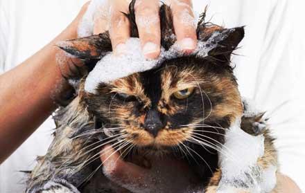 Biaya Salon Kucing Murah