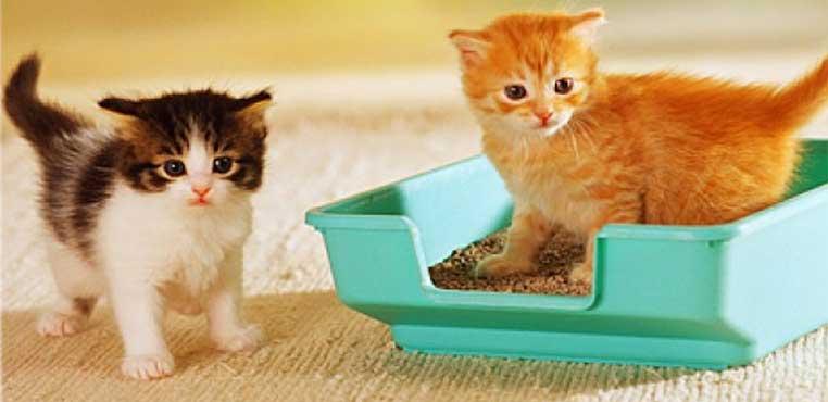 Cara Merawat Anak Kucing Agar Tidak Mati