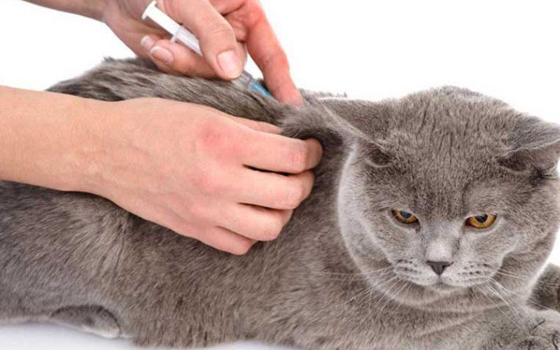 Biaya Vaksin Kucing 2021