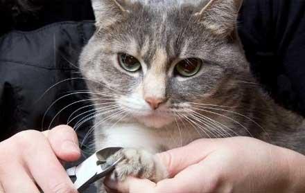 Jasa Grooming Kucing Murah