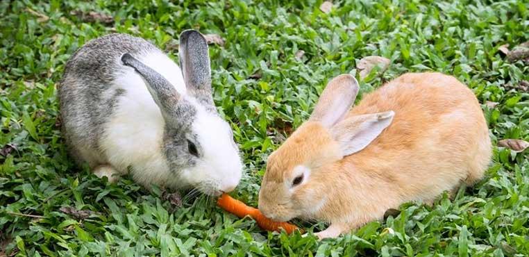 Makanan Kelinci Umur 2 Bulan