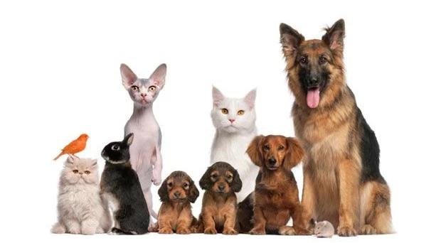 Pet Shop Murah Jakarta