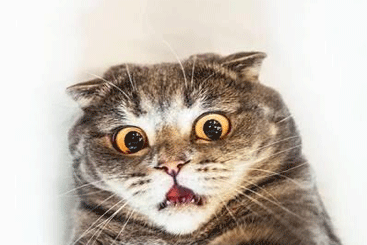 Salon Kucing Murah