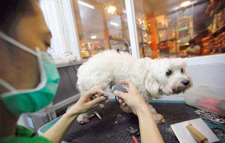 Jasa Grooming Anjing Terdekat