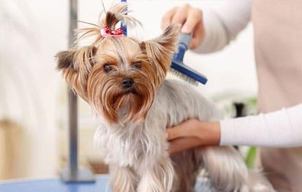 Jasa Mandiin Anjing Profesional