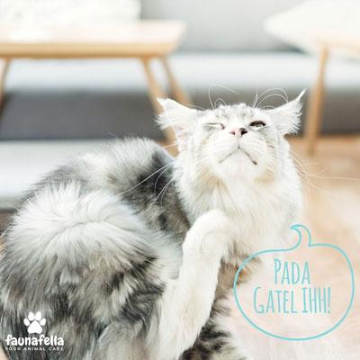 Kucing Gatel Mandi