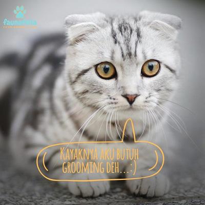 Kucing Mandi Jakarta Profesional
