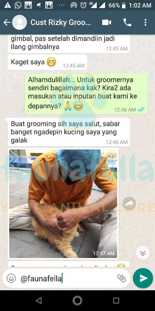 Salon Kucing Testimoni