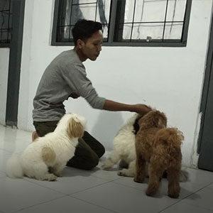 Analisa Behaviour Anjing