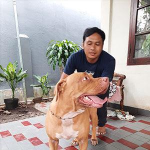 Asisten Pelatih Anjing Faunafella