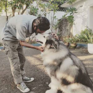 Jasa Training Anjing