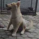 Kaizo Dog