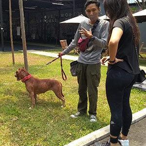 Kontrol Dan Evaluasi Hasil Pelatihan Anjing