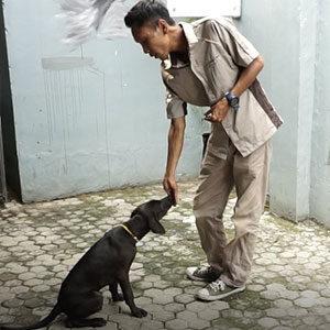 Pengenalan Behaviour Anjing