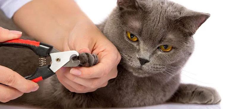 Cara Menggunting Kuku Kucing Dengan Benar