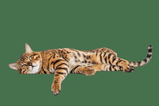 Cara Mengatasi Jamur Pada Kucing Secara Aman