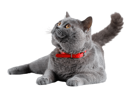 Cara Menghilangkan Jamur Pada Kucing Secara Alami Dan Cepat
