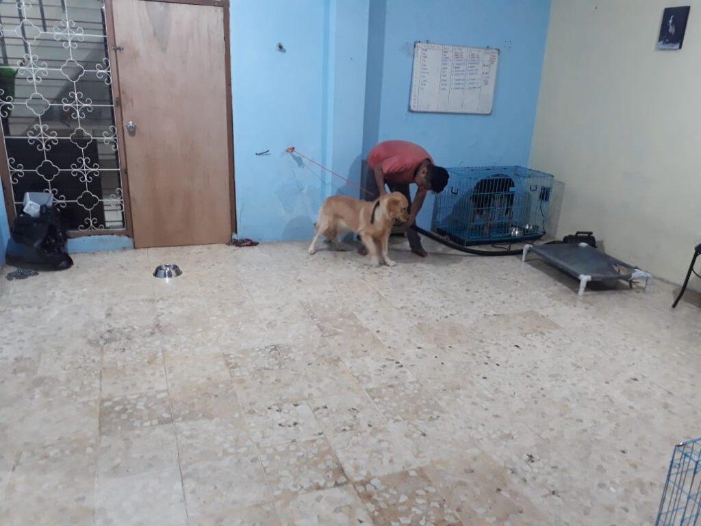 Lokasi Pelatihan Anjing Terbaik Indonesia