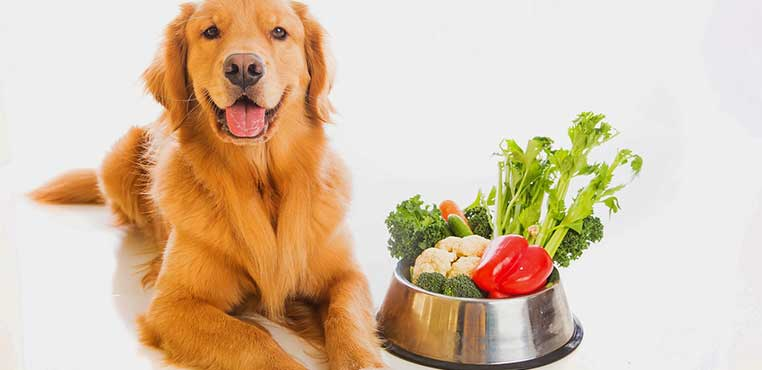 Makanan Anjing Kampung Dari Nasi