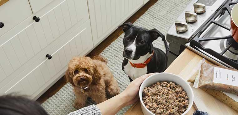 Makanan Dari Nasi Untuk Anjing Kecil
