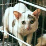 Grooming Kucing Antar Jemput Terdekat