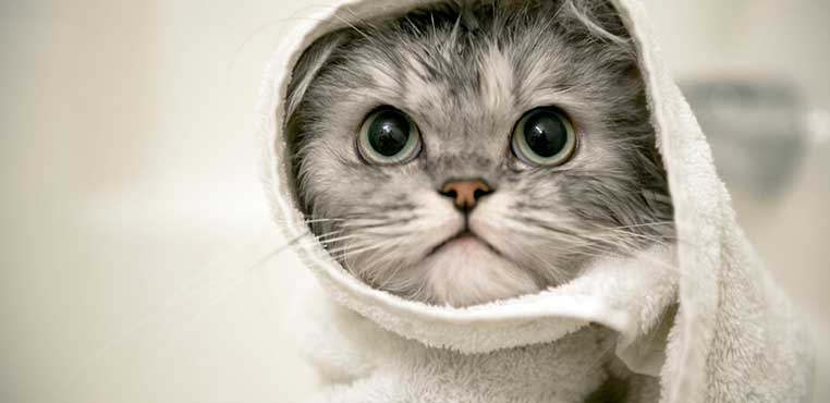 Harga Grooming Kucing Surabaya