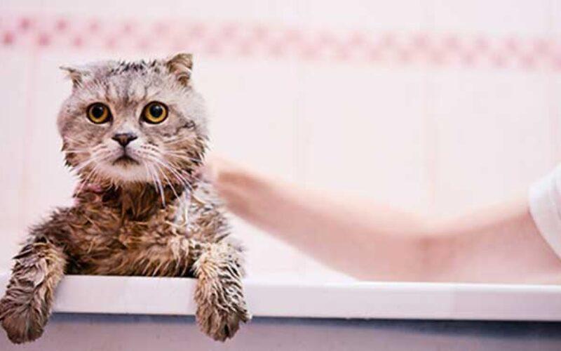 Tempat Grooming Kucing