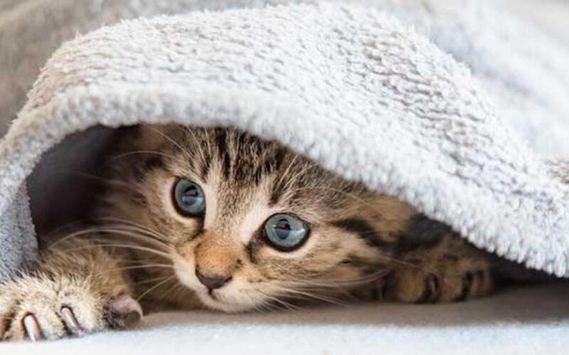 Arti Grooming Kucing