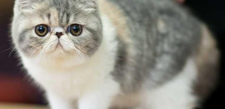Biaya Grooming Kucing Di Petshop Yang Murah