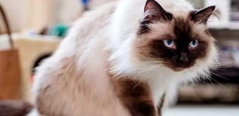 Biaya Grooming Kucing Di Petshop
