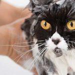Cara Grooming Kucing Di Petshop