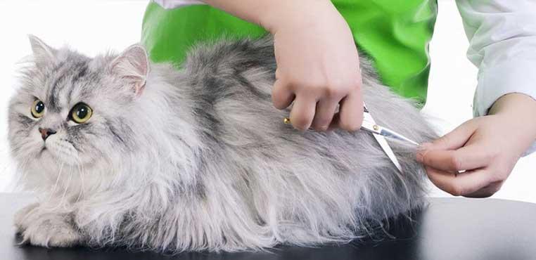 Daftar Harga Grooming Kucing