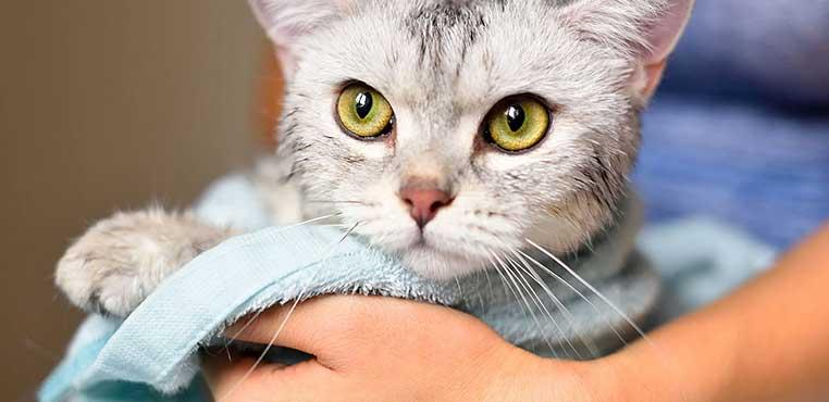 Fungsi Grooming Kucing Di Rumah