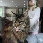 Grooming Kucing Banjarmasin