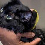Grooming Kucing Di Bandung
