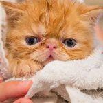 Grooming Kucing Jogja
