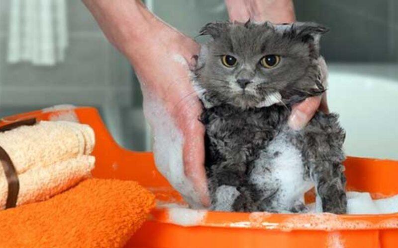 Grooming Kucing Murah Terdekat