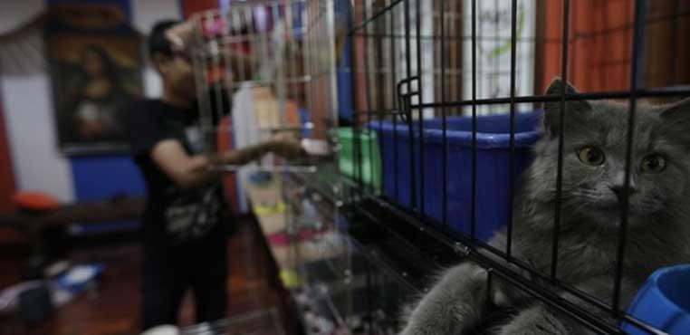 Harga Grooming Kucing Di Bandung Murah