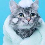 Jasa Grooming Kucing Di Jogja