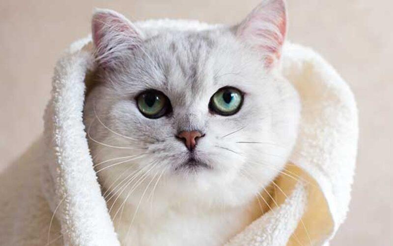 Syarat Grooming Kucing