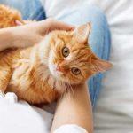 Tempat Grooming Kucing Terdekat Murah