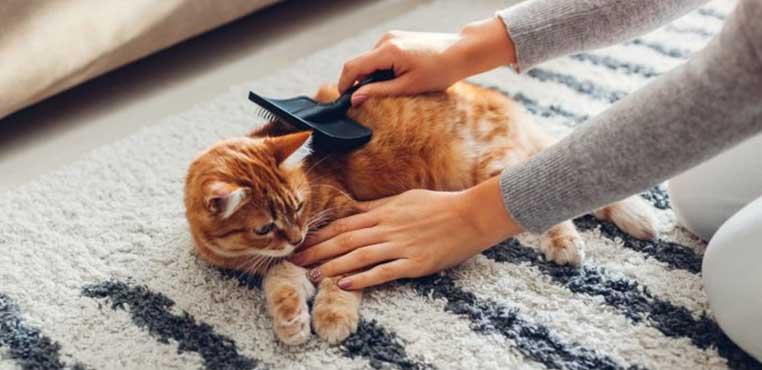 Tempat Grooming Kucing Terdekat Yang Murah