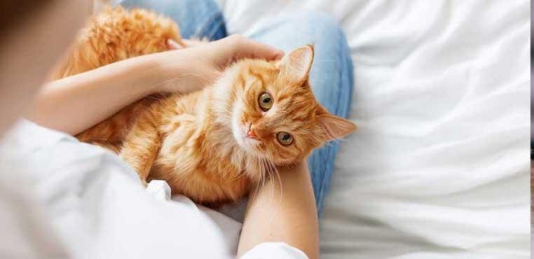 Tempat Grooming Kucing Terdekat