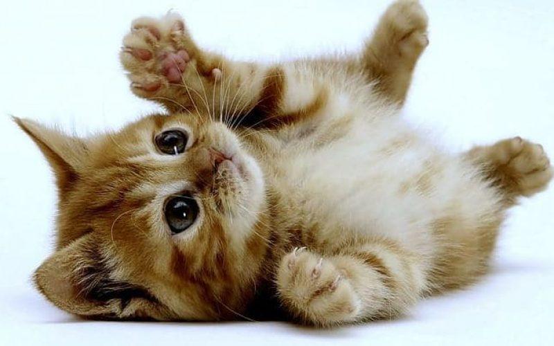 Ini 9 Cara Mengobati Jamur pada Kucing Kitten